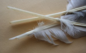 Feathers in stages of being made into quills. Photograph by Jonathunder (own work) as found on Wikipedia.