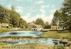Vintage postcard of the Nashua Hatchery, circa 1906