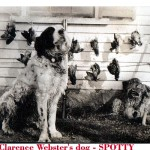 My grandfather, Clarence L. Webster&#039;s hunting dog, &quot;Spotty.&quot;