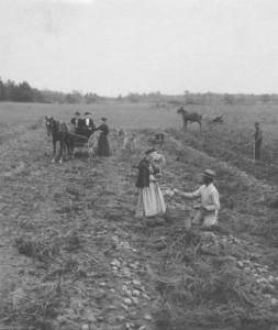 "Photograph courtesy of the UC Riverside California Museum of Photography, ""Measuring Potatoes in Field.  Reeds Ferry, N.H., Gifford M. Mast, Keystone-Mast Collection, date unknown"