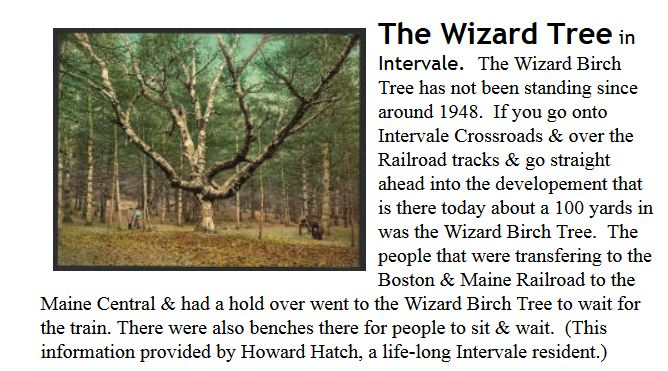 From Bartlett Historical Society web site explaining the Wizard Tree.
